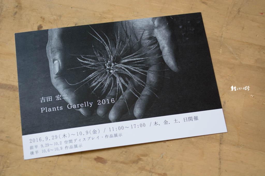吉田宏二の個展【Plants Gallery2016】