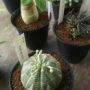 観葉植物と鉢、新入荷です!